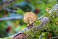Картинка грибы, макро, дерево