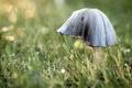 Картинка макро, природа, гриб