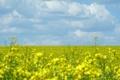 Картинка поле, цветы, природа, обои, пейзажи