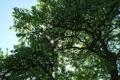 Картинка листья, солнце, лучи, свет, деревья, природа, дерево