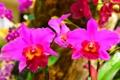 Картинка макро, природа, растение, лепестки, орхидея