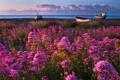 Картинка море, небо, трава, вода, цветы, тучи, берег