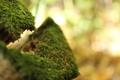 Картинка лес, мох, старое дерево
