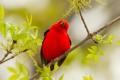 Картинка листья, птица, цвет, ветка, перья, клюв