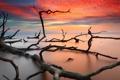 Картинка море, пейзаж, закат, дерево