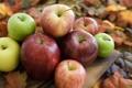 Картинка осень, яблоки, сад, урожай