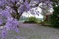 Картинка цветы, дом, дерево