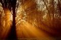 Картинка трава, лучи, свет, деревья, природа, фото, дерево