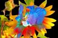 Картинка цветок, линии, фон, лепестки, краски, рендеринг