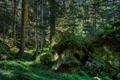 Картинка green, forest, trees, wood, rocks, Moss