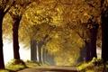 Картинка дорога, осень, утро