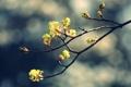 Картинка природа, фото, обои, картинки, растения, ветка, весна
