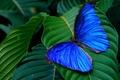 Картинка листья, бабочка, butterfly