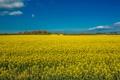 Картинка поле, небо, облака, деревья, цветы, рапс