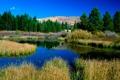 Картинка лес, Пейзаж, трава, холмы, природа, озеро