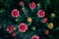Картинка flower, Цветок, лепестки