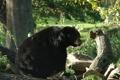 Картинка лес, деревья, черный медведь, америкиканский
