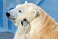 Картинка фон, медведи, зоопарк