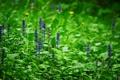 Картинка поляна, лес, весна, растения, боке, цветы