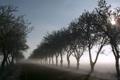 Картинка утро, деревья, дорога, туман