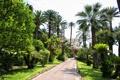 Картинка пальмы, Франция, дорожка, отель, аллея, Menton