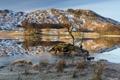 Картинка пейзаж, горы, озеро, дерево