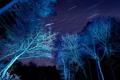 Картинка небо, звезды, свет, деревья, ночь