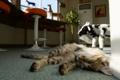 Картинка кошка, кот, комната, сон, спит, лежа