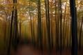 Картинка лес, пейзаж, стиль