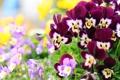 Картинка цветы, природа, яркие, лепестки, красивые
