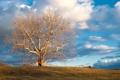 Картинка небо, облака, природа, дерево, голое