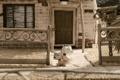 Картинка дом, мультфильм, собачки, пластилиновый, мэри и макс