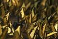 Картинка бабочки, насекомые, обои, разное