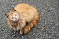 Картинка морда, камушки, взгляд, кошка