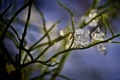 Картинка зима, трава, макро, льдинки