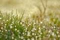 Картинка трава, капли, макро, роса, блики, боке, розмытости