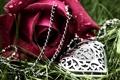 Картинка капли, роза, любовь, сердце, цветы
