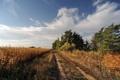 Картинка дорога, поле, осень