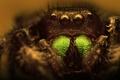 Картинка паук, насекомое, боке