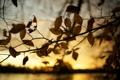 Картинка осень, листья, макро, природа, дерево, фотографии, осенние обои
