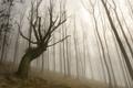 Картинка деревья, пейзаж, туман