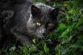 Картинка кошка, трава, глаза, кот, взгляд, морда