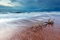 Картинка море, небо, пейзаж, ветка