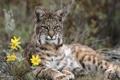 Картинка цветы, Кошечка, изящество