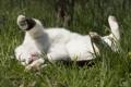 Картинка кот, отдых, трава, кошак