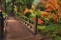 Картинка осень, деревья, мост, парк