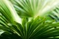 Картинка макро, зеленые, Лепестки