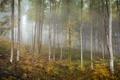 Картинка осень, лес, природа, берёзы