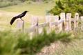 Картинка лето, птица, забор