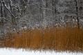 Картинка зима, лес, снег, деревья, растение